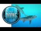 V�deo: World of Diving | Gameplay en espa�ol