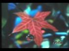 Video: Lightning Seeds - Pure