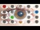 Video: Como Eres Según El Color Que Más Te Gusta