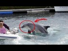 V�deo: Este delf�n tiene fama de ser asesino